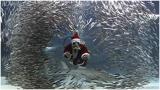 京东搬来了一大波圣诞老人,承包了整个城市!