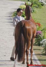奥运比赛中唯一一个有马的王子