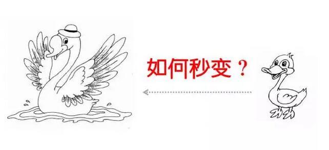 画天鹅的步骤图