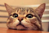 不撸猫做不好萌宠广告?你今天吸猫了吗?